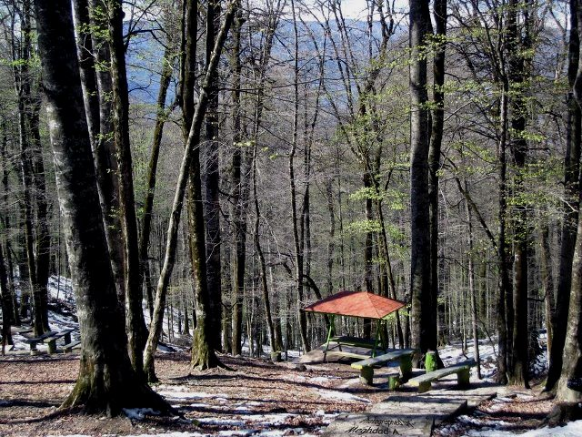 پارک جنگلی نمک آبرود