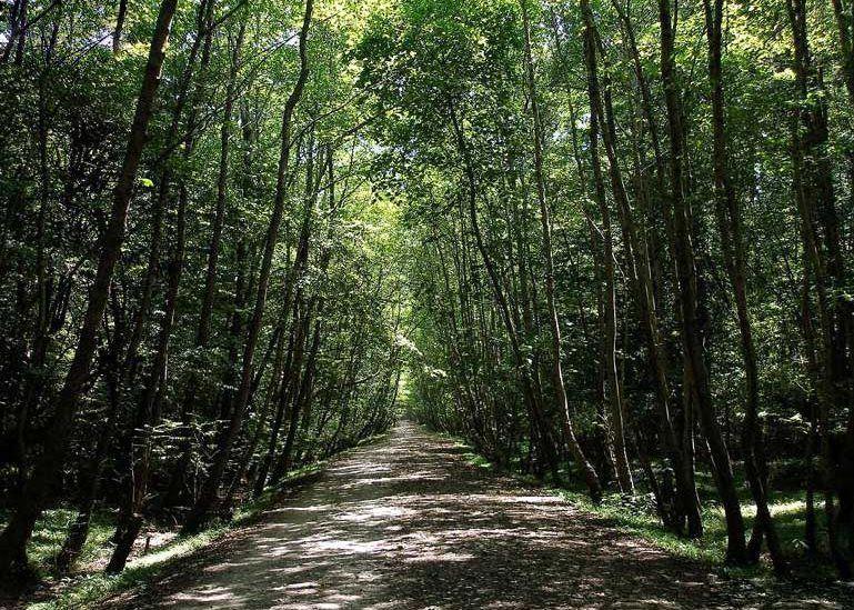 پارک+جنگلی+سی+سنگان (