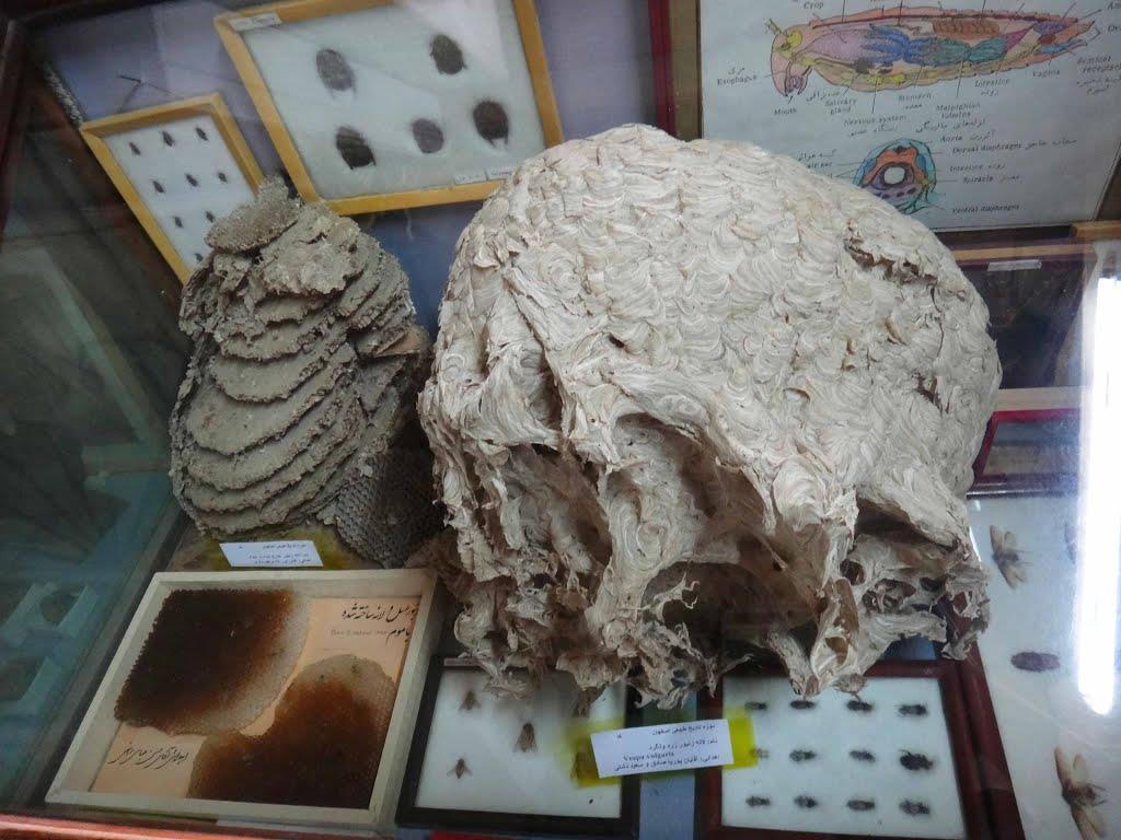 موزه ی تاریخ طبیعی اصفهان
