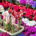 معرفی باغ گیاهشناسی چین