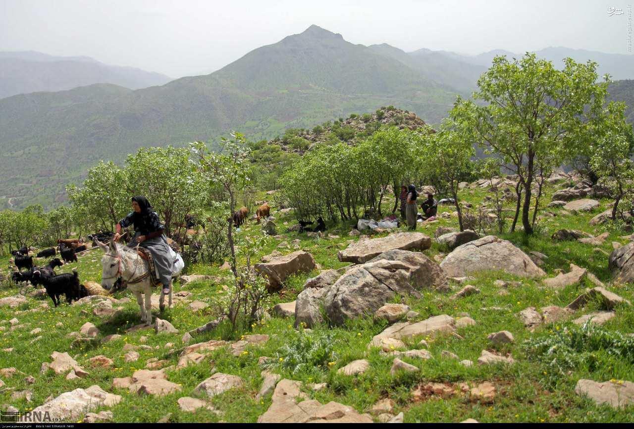 کوه شاهو کرمانشاه