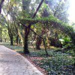 باغ گیاهشناسی