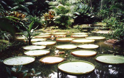 باغهای بوتانیک سنگاپور