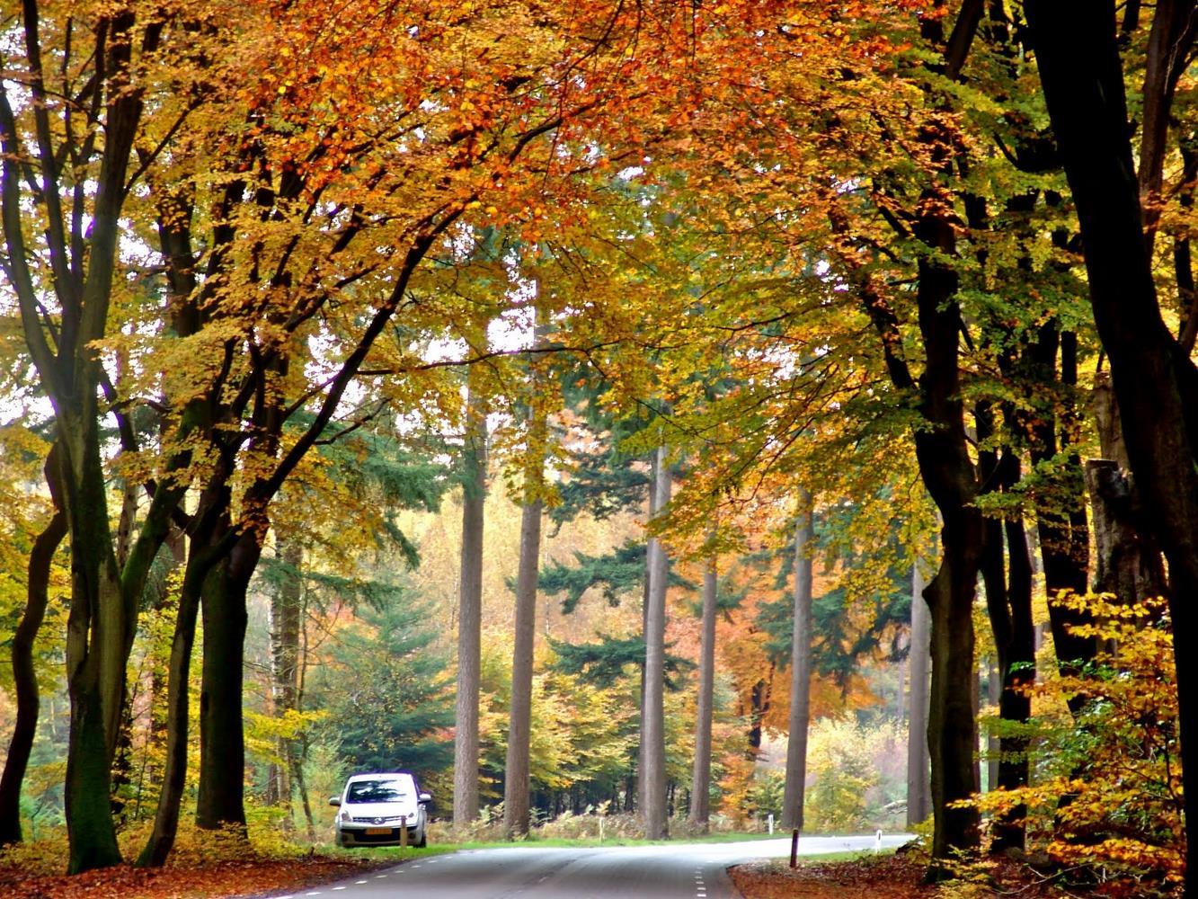 پارک ملی هاگ ولو هلند