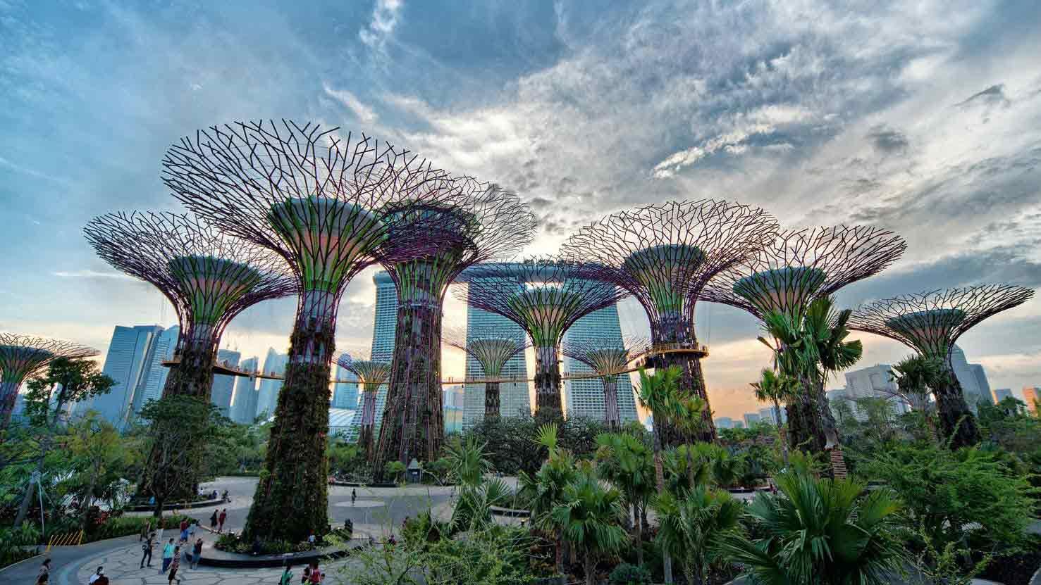 جنگل ابر سنگاپور