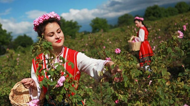 دره گل سرخ