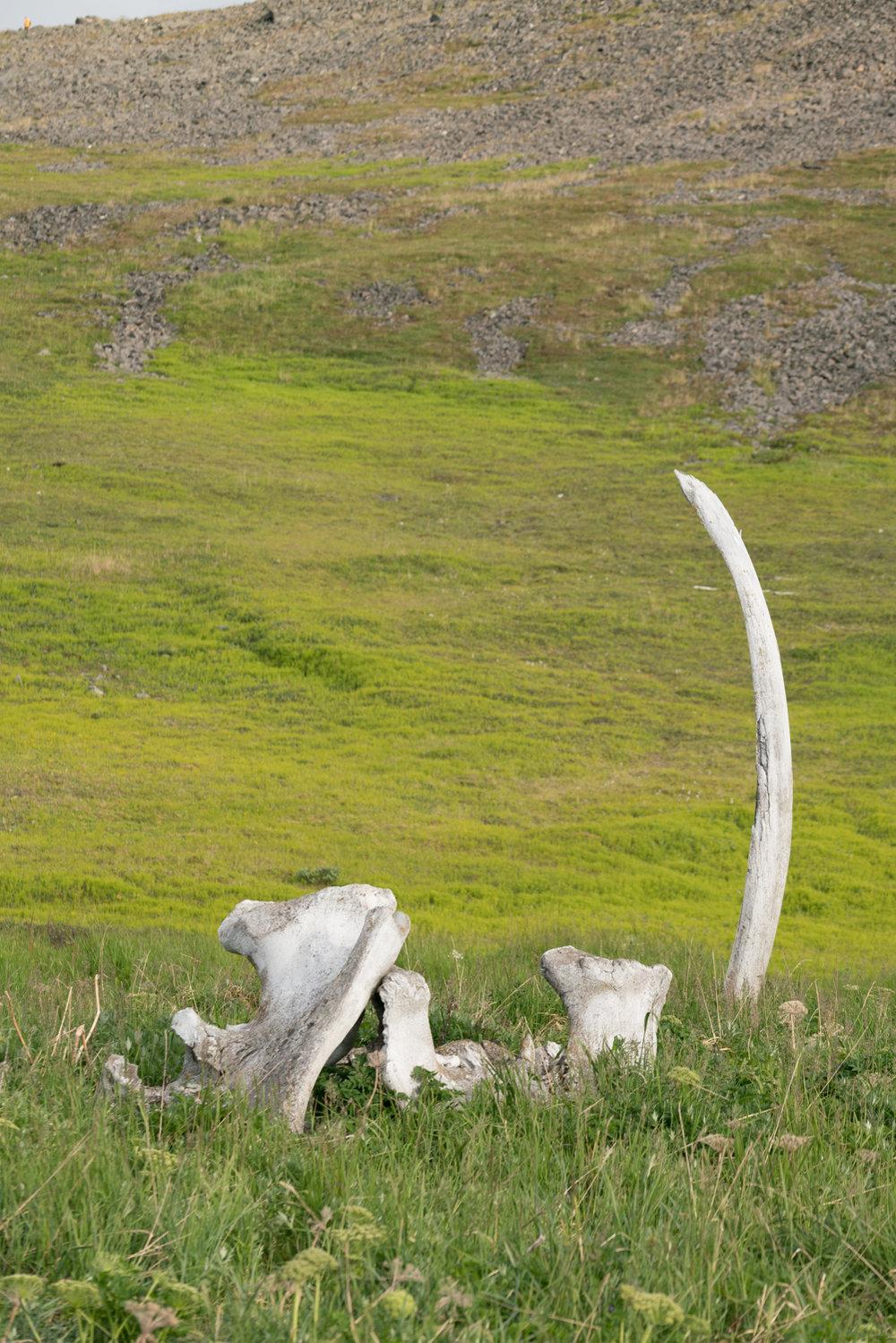راهی مملو از استخوان نهنگ