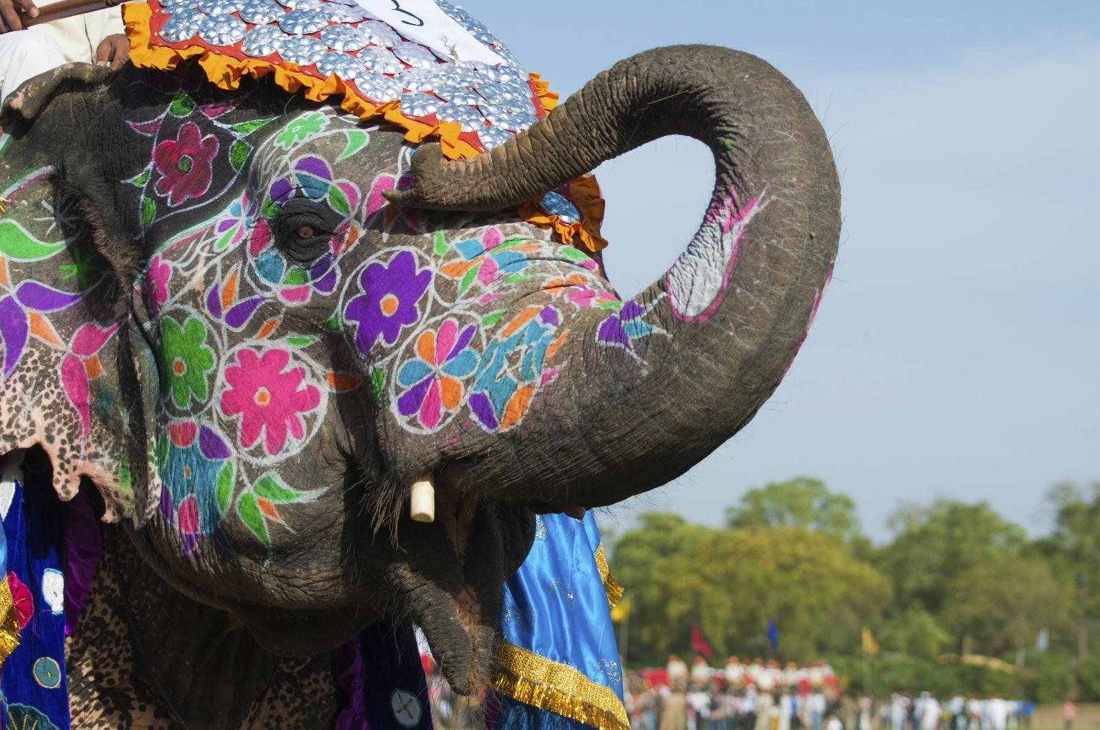 جشنواره فیل ها