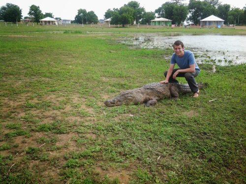 تمساح های اهلی غنا
