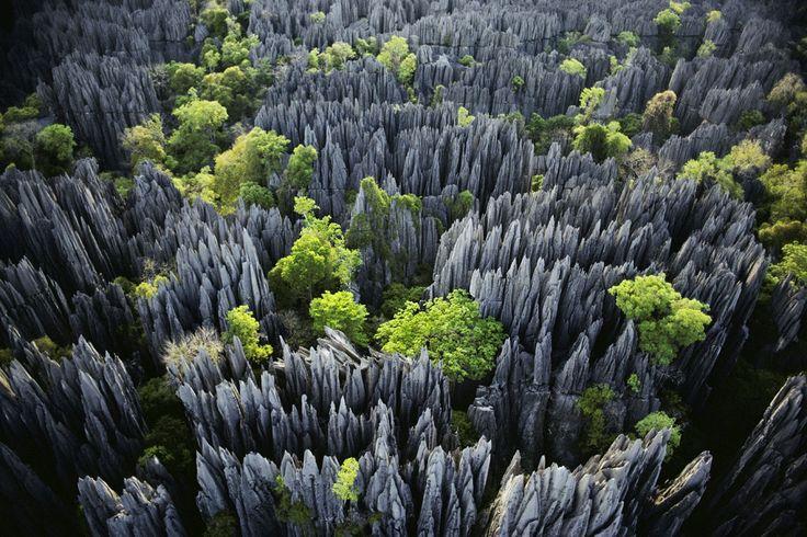 جنگلی از چاقو در ماداگاسکار