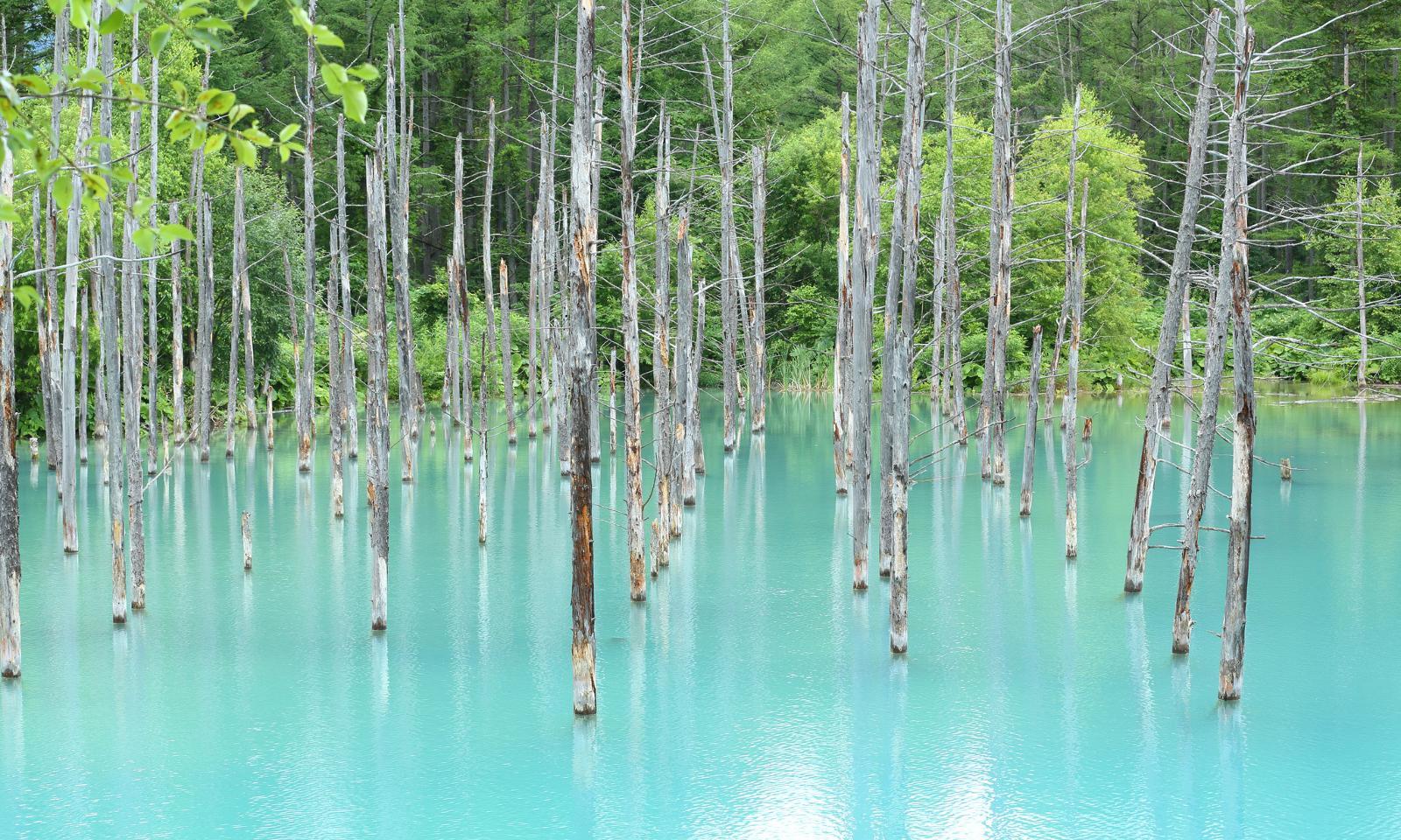 تالاب آبی ژاپن