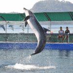 پارک دلفین مارماریس