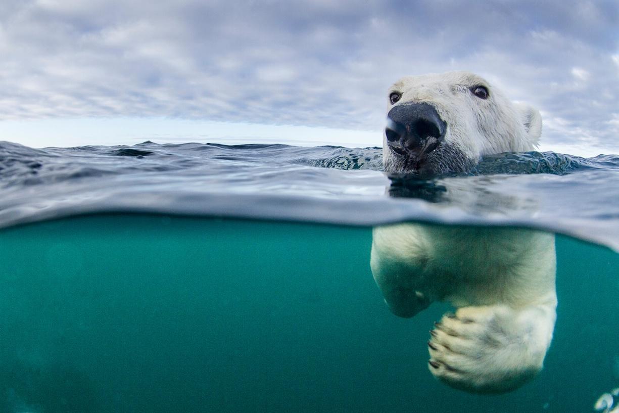 بهترین کشورها برای دیدن خرس قطبی