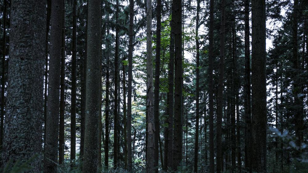 هرگز به این جنگل وارد نشوید