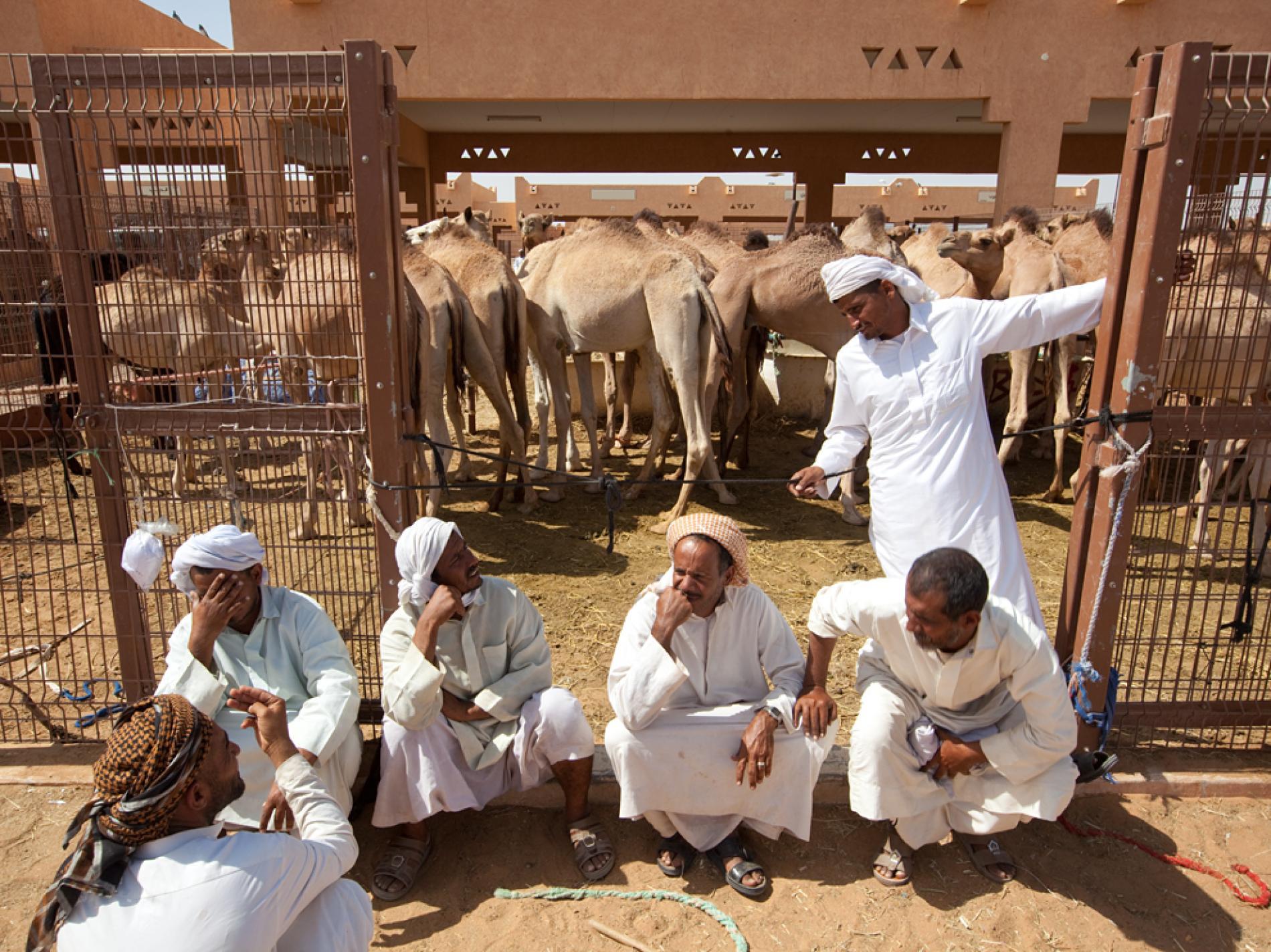 بازار شتر العین امارات