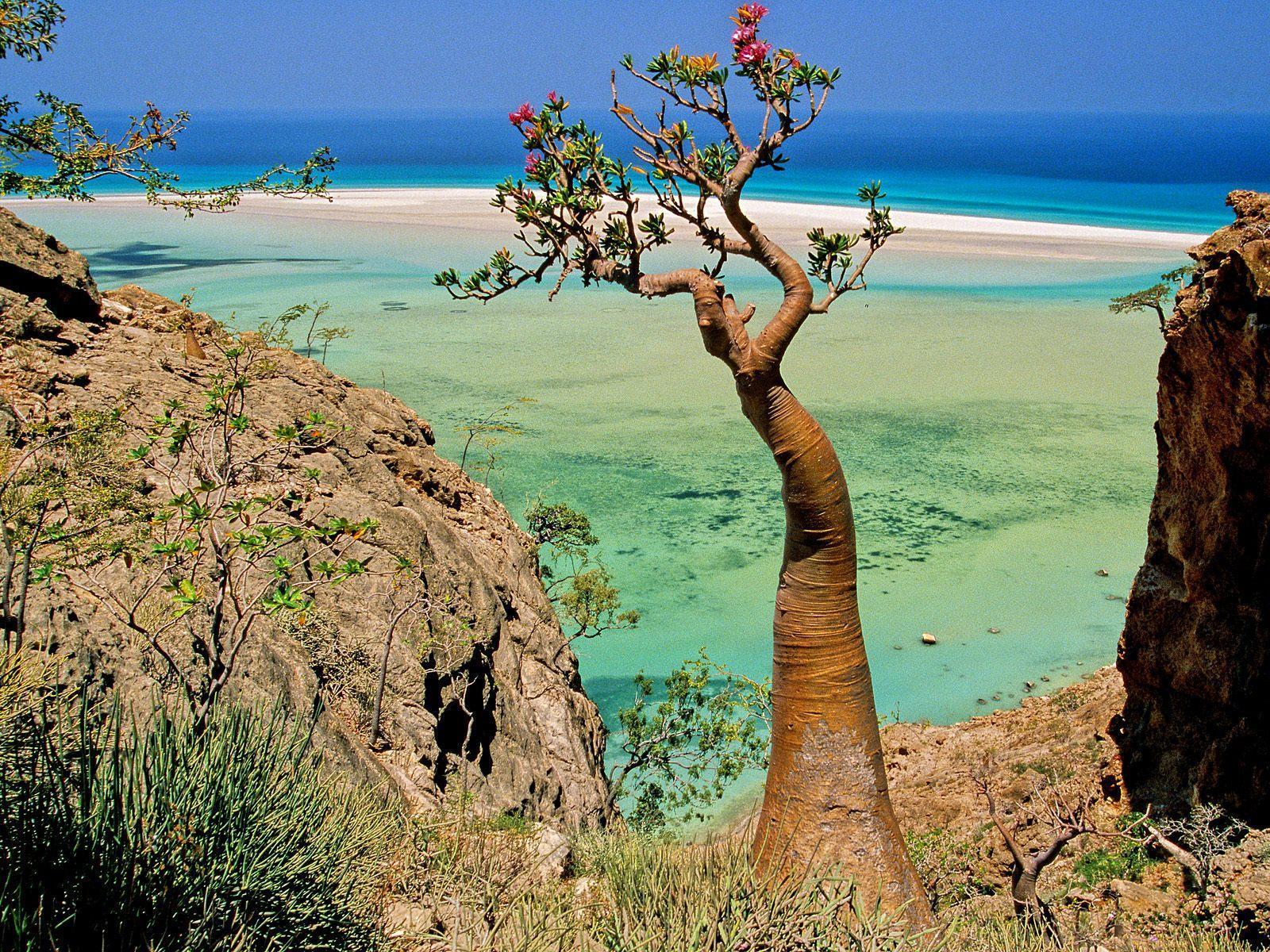 جزیره دور افتاده با درختانی عجیب