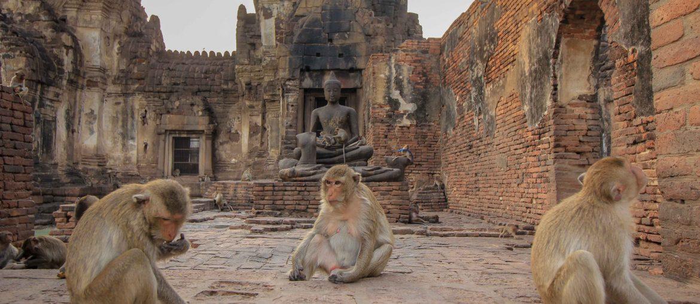 به تماشای میمون های تایلندی دعوتید
