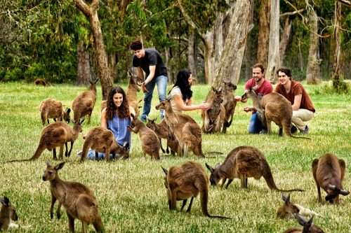 جاذبه های گردشگری آدلاید دراسترالیا