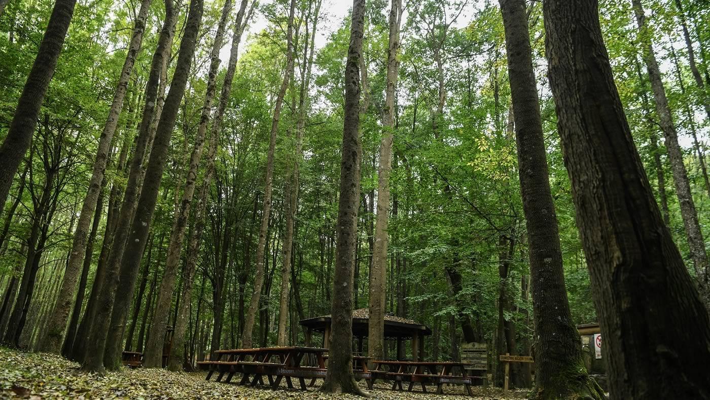 جنگل بلگراد در قلب استانبول
