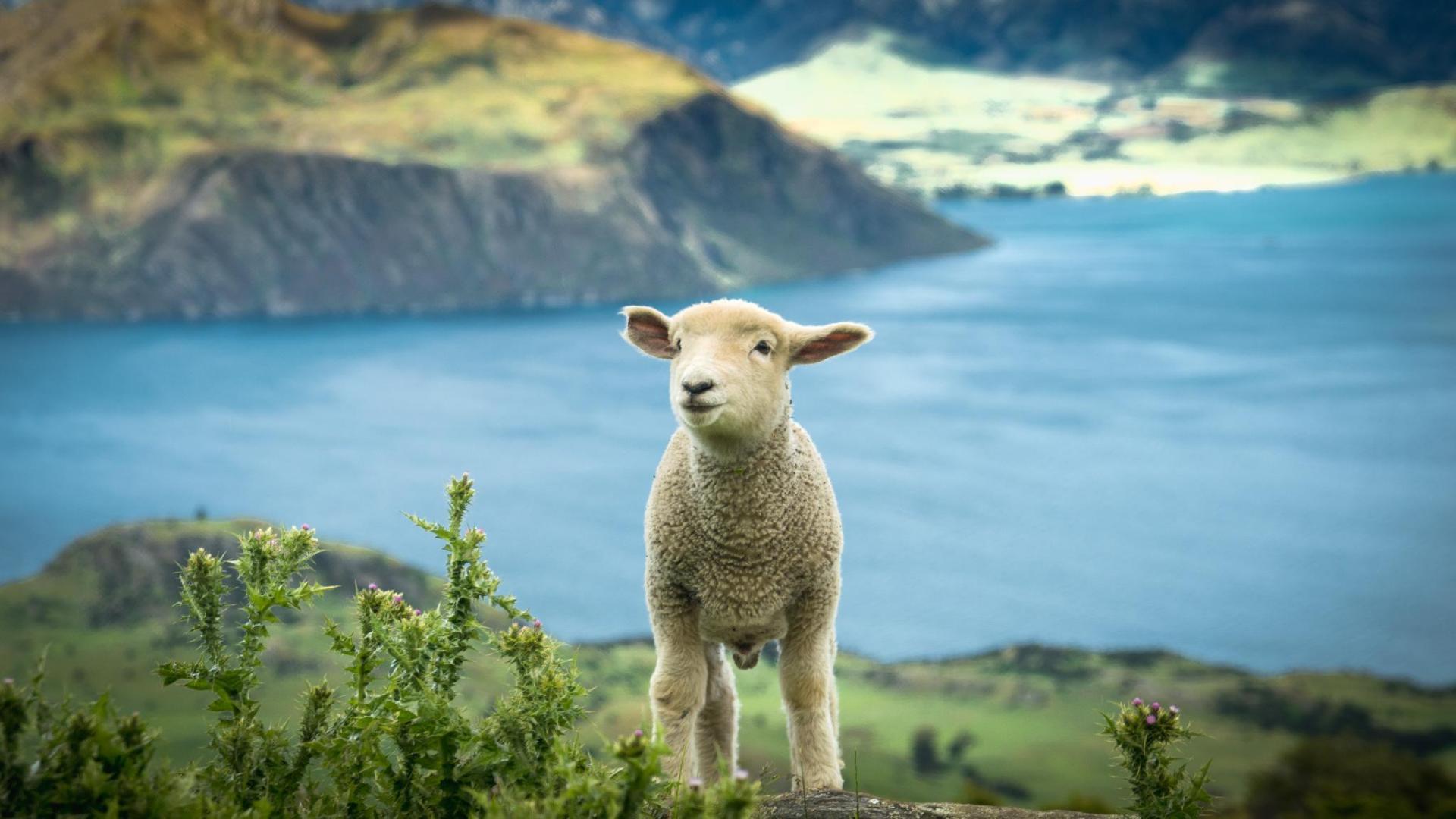 سفر به نیوزلند