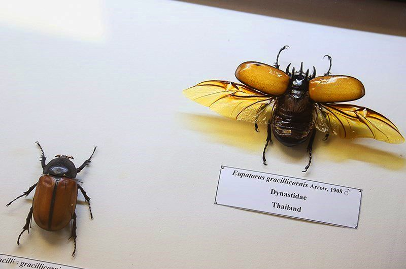 موزه حشرات هایک میرزایانس تهران