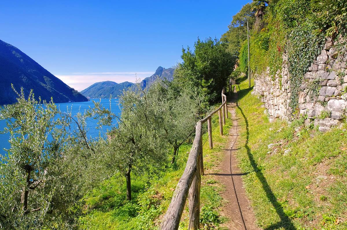راه زیتون لوگانو تیچینو سوئیس