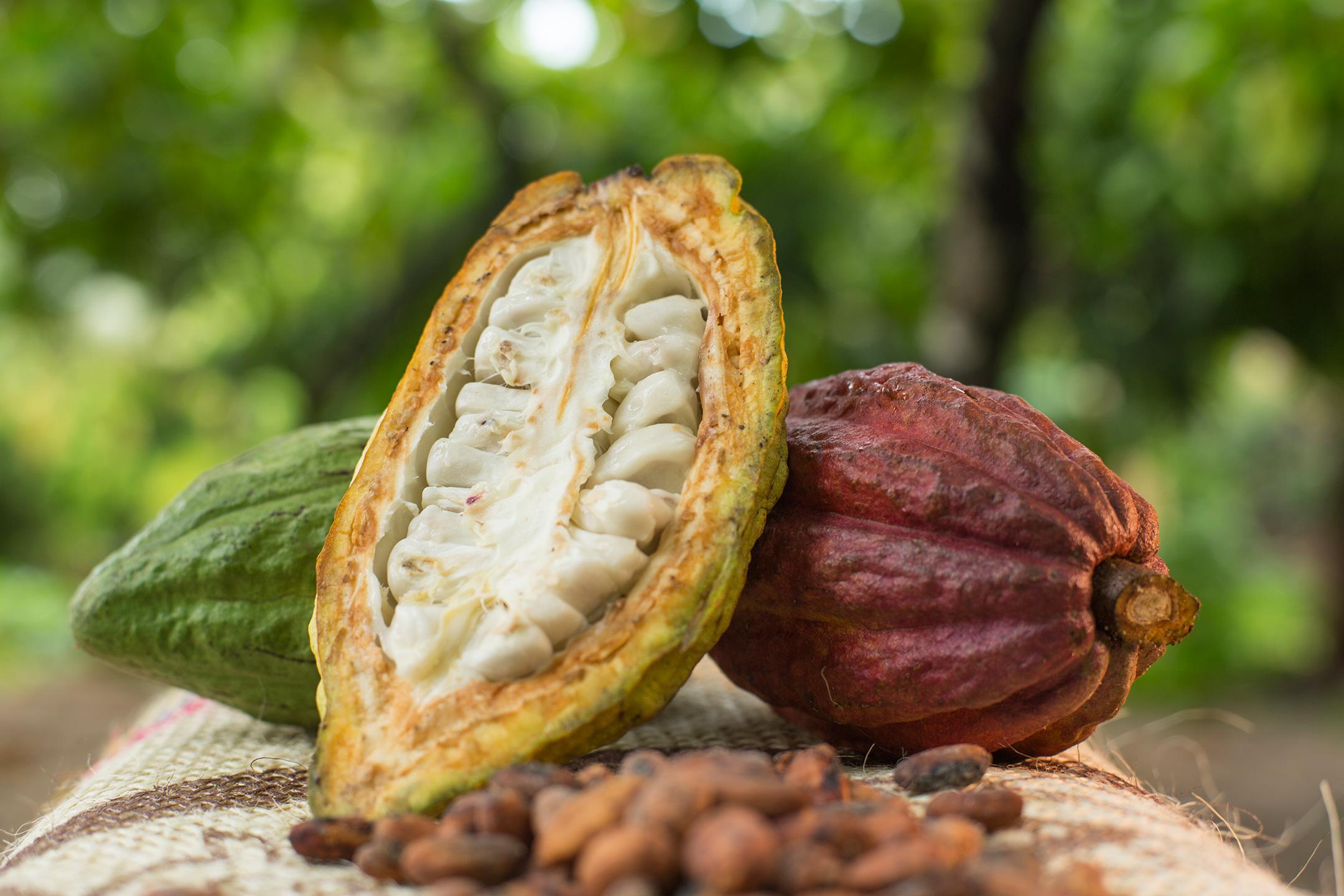 کاکائو چیست و از کجا می آید