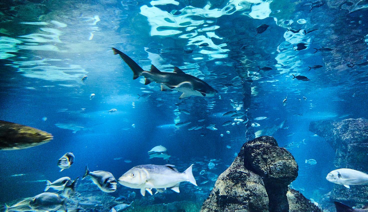 تجربه دیدن دنیای زیر آب در آکواریوم بارسلونا