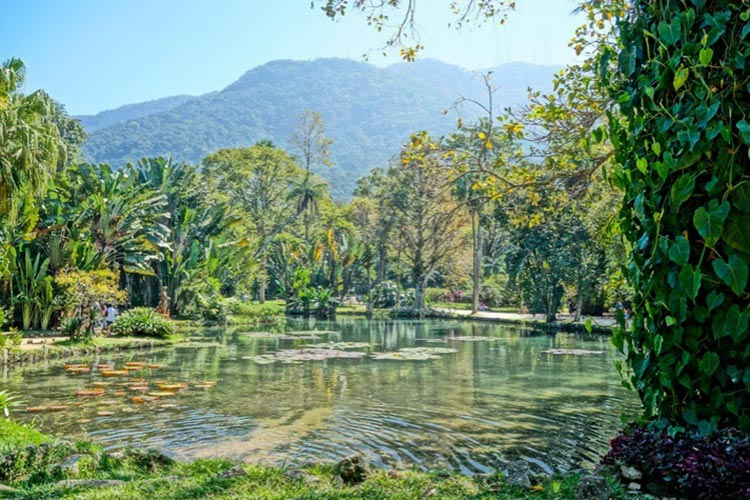 باغ گیاه شناسی باستانی ریو دوژانیرو