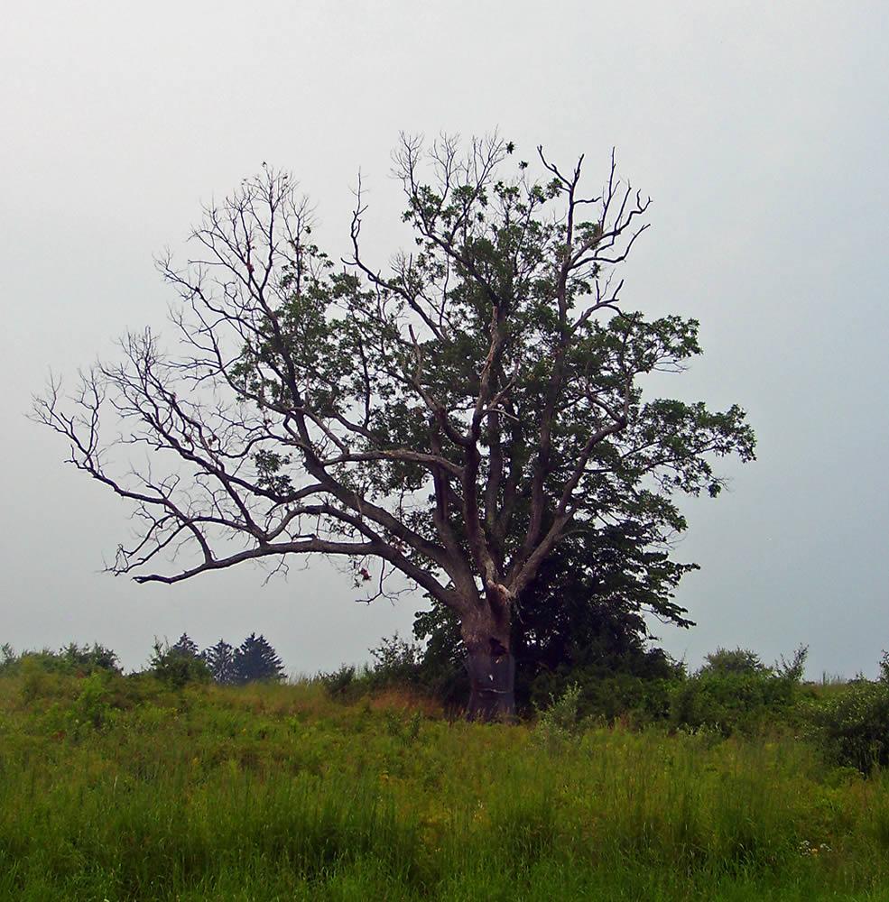 ماجرای درخت شیطانی در نیوجرسی