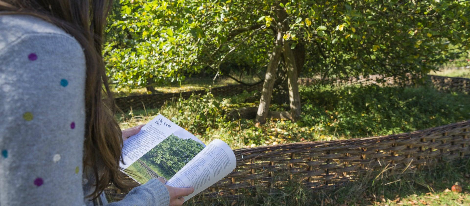 درخت سیب نیوتن لندن
