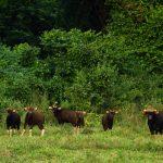 پارک ملی کوری بوری تایلند