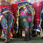 مهمانی باشکوه فیل ها هند