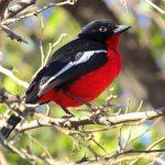 پارک ملی پیلانسبرگ سان سیتی آفریقای جنوبی