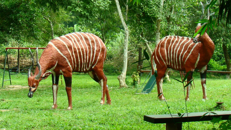پارک ملی کاکوم
