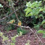 جنگل بودونگو