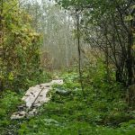 پارک ملی ماتسالو