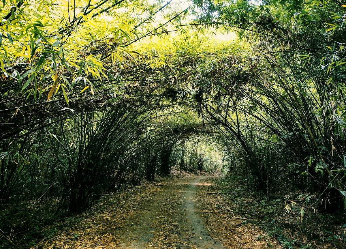 پارک ملی کت تیان ویتنام