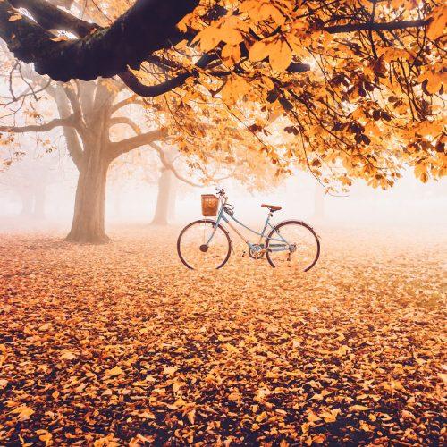 پاییز رنگارنگ در کشورهای مختلف جهان