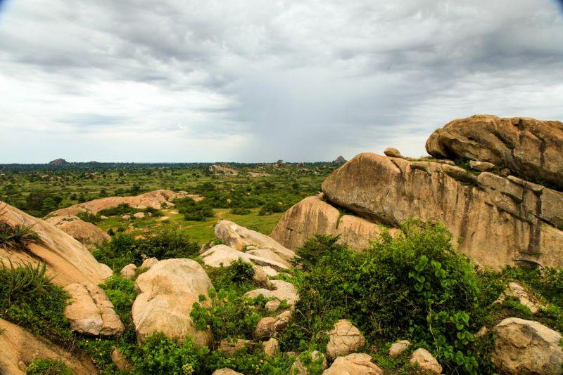 جنگل کارورا در نایروبی