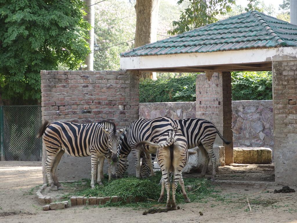 باغ وحش لاهور