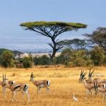 پارک ملی آمبوسلی در کنیا