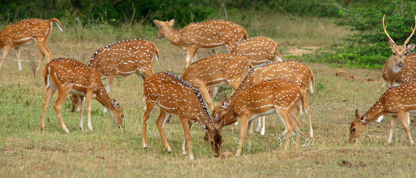 پارک ملی یالا در سریلانکا
