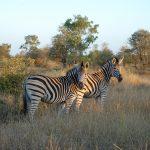 پارک جنگلی انتابنی آفریقای جنوبی