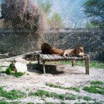 باغ وحش کابل