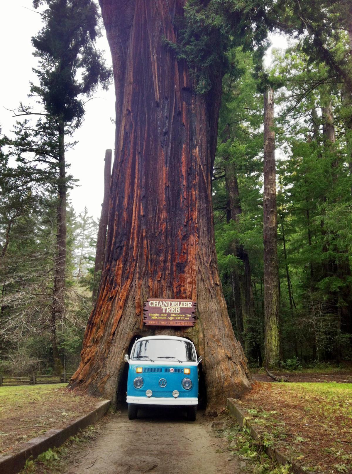 مخوف ترین جاده هایی از دل درختان میگذرد