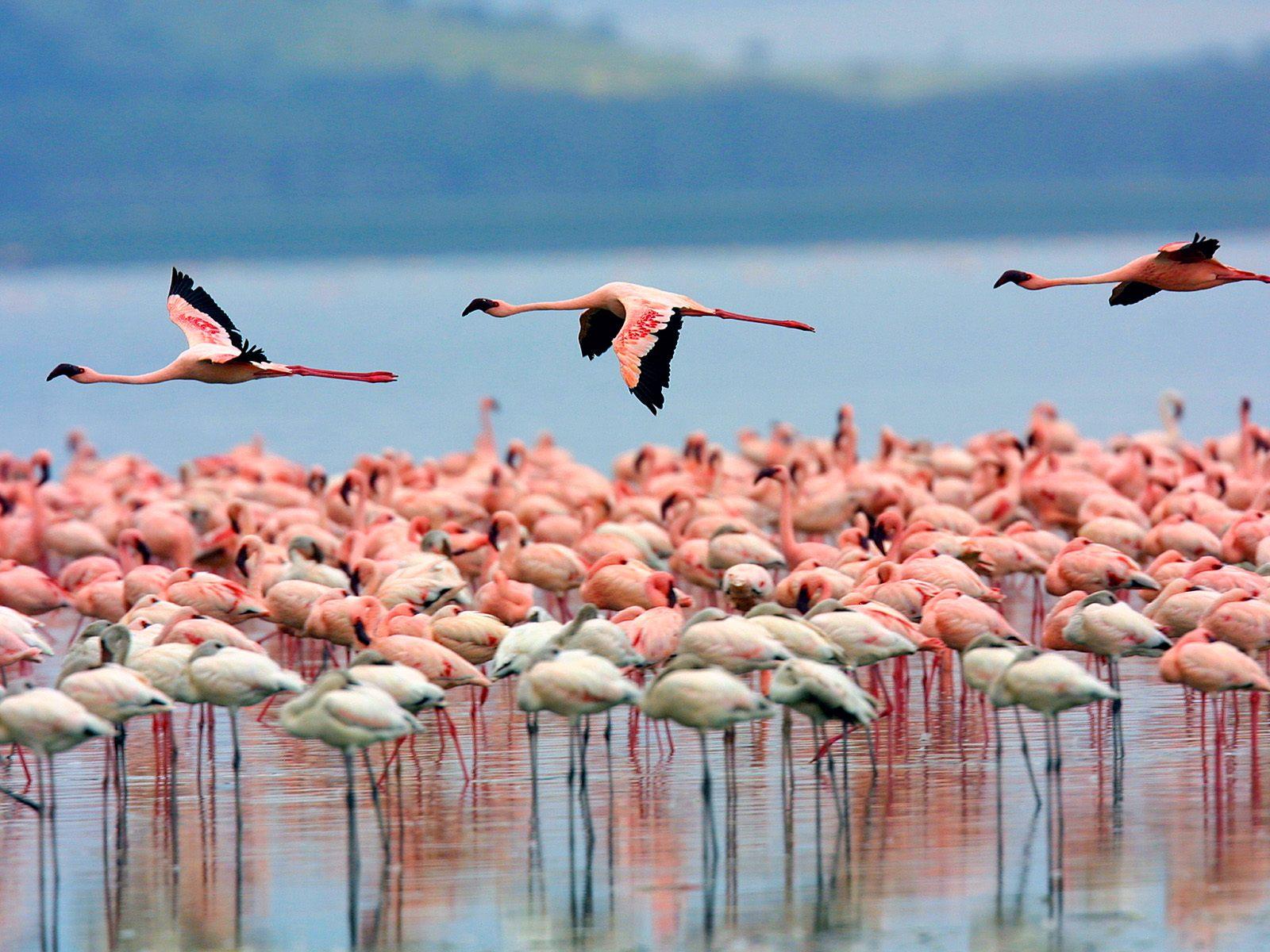 پارک ملی دریاچه ناکورو