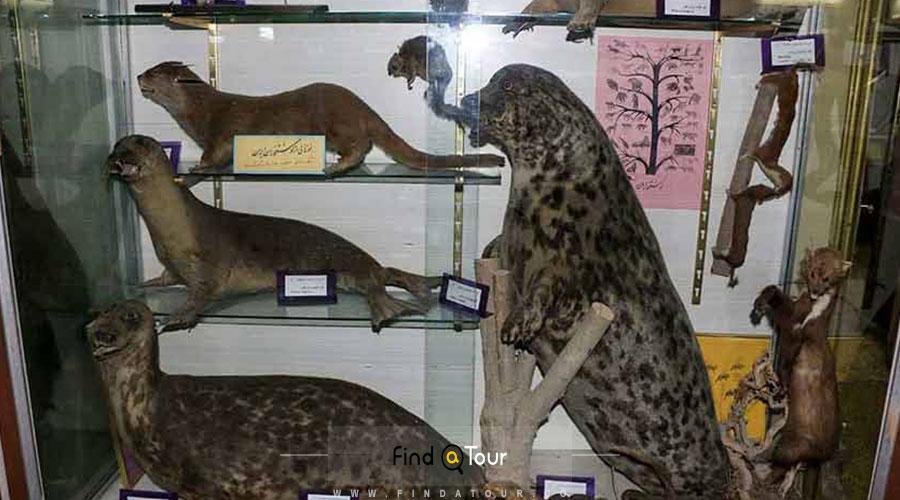 موزه تاریخ طبیعی ارومیه