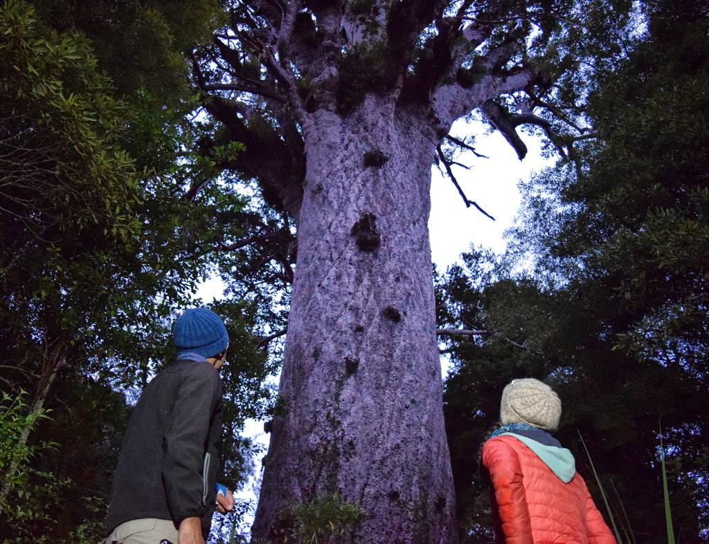 سلطان جنگل نیوزلند