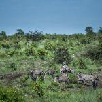 پارک ملی کافو در زامبیا